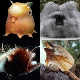 بالصور: إليكم أغرب المخلوقات التي اكتشفها الباحثون على مر التاريخ