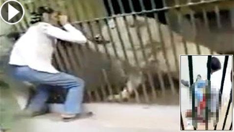 فيديو صادم.. أسد ينهش ذراع حارسه أثناء إطعامه في هجوم مباغت غادر!