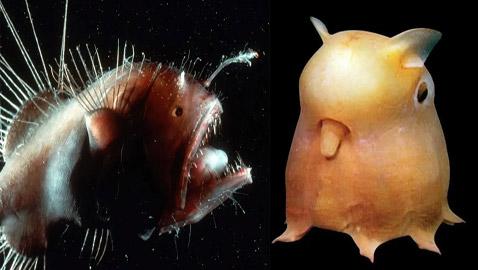 الأسماك الناطقة.. وأغرب المخلوقات على مر التاريخ