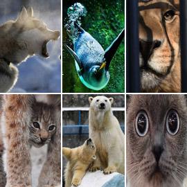 لقطات فريدة مدهشة.. إليكم أفضل صور الحيوانات لعام 2019