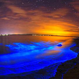 الشواطئ المتوهجة.. لغز حيّر العلماء