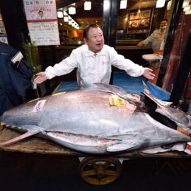 بيع سمكة تونة بحوالي 2 مليون دولار في مزاد علني.. فما قصتها؟
