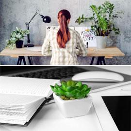 النباتات المكتبية يمكن أن تقلل من الإجهاد في العمل