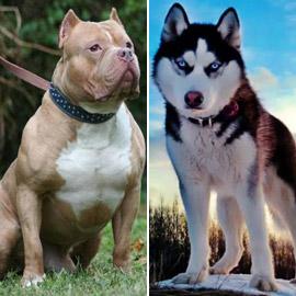 صور: تعرفوا إلى أخطر وأشرس 5 كلاب حول العالم