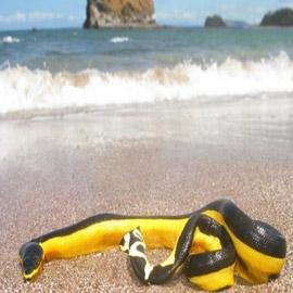 صور 10 شواطئ هي الأخطر فى العالم! احذروها!