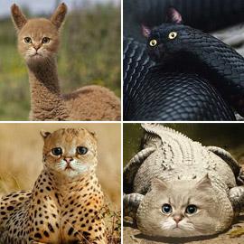 صور مدهشة وغريبة.. فنان يحوّل الحيوانات إلى قطط!