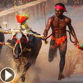 عامل هندي يكسر رقم الأسطورة بولت ويقطع مسافة 100 متر بـ9.55 ثانية!