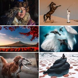 أجمل الصور الفائزة بمسابقة جوائز سوني للتصوير لعام 2020