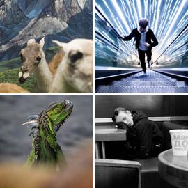 القائمة القصيرة لجوائز سوني العالمية للتصوير في فئتي الطلاب والشباب