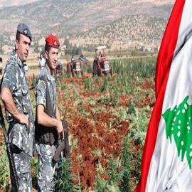 هل ينقذ الحشيش اقتصاد لبنان؟