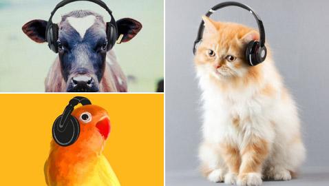 صور: تعرفوا إلى تأثير الموسيقى على الحيوانات والتي لم تدروكها من قبل