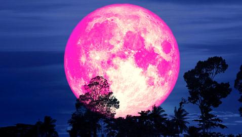 لا يظهر إلا مرة واحدة بالسنة.. استعد لالتقاط صور القمر الوردي العملاق