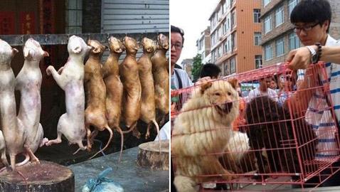 قرار تاريخي.. أول مدينة صينية تحظر تناول لحوم القطط والكلاب!
