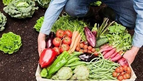 أفضل الخضروات التي يمكنك زراعتها في المنزل خلال العزل
