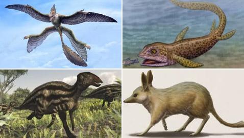 بالصور: تعرفوا إلى 12 من أصغر حيوانات ما قبل التاريخ المذهلة