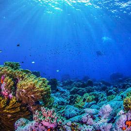 كائنات مائية غريبة تعيش تحت درجة الصفر.. صور