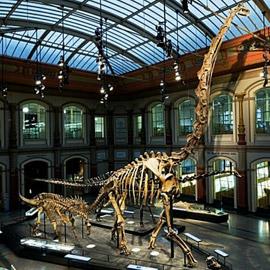 أجمل متاحف الديناصورات حول العالم