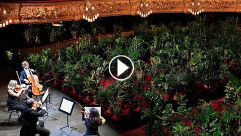 بالفيديو والصور.. أول حفل بعد الحجر.. أوبرا برشلونة للنباتات فقط