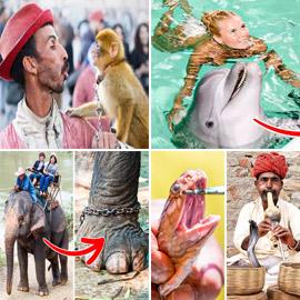 بالصور: تعرفوا إلى نشاطات ترفيهية للبشر لكنها مكروهة من الحيوانات