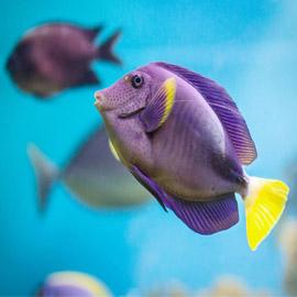 إليكم تفسير حلم ورؤية السمك في المنام.. على ماذا يدل؟