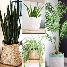 صور: إليكم 8 نباتات منزلية للصيف تلطف وترطب الهواء في الأيام الحارة
