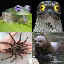 بالصور: تعرفوا إلى أغرب وأخطر الحيوانات في غابات الأمازون