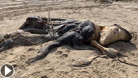 العثور على مخلوق غامض بشكل غريب طوله 15 قدما في بريطانيا