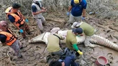 بعد أيام على اختفائه.. العثور على بقايا صبي داخل بطن تمساح