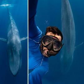 غواص يخاطر بحياته لالتقاط صورة بعمق المحيط مع حوت أزرق عملاق!