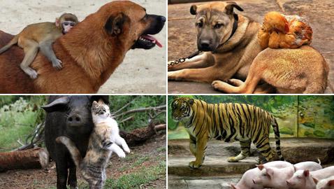 بالصور: إليكم أغرب الصداقات المميزة بين الحيوانات