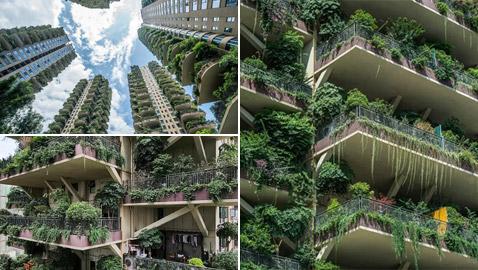 الغابات المعلقة.. ناطحات سحاب أسيرة النباتات والحشرات بشكل مذهل