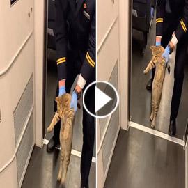بالفيديو.. قطار صيني يطردُ قطة بدون تذكرة