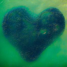 قلب وسط البحر: مصور يوثق مشهدا ساحرا لأسماك دام لثواني فقط بأستراليا