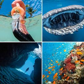 بالصور: مشاهد رائعة من الحياة البحرية.. فازت بمسابقة عالمية للتصوير