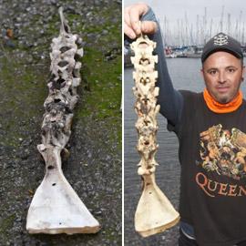 بالصور: العثور على بقايا عظام حورية البحر في بريطانيا!