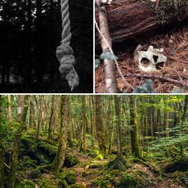 إليكم أكثر 10 حقائق غريبة ومزعجة ومؤرقة عن غابة الانتحار في اليابان!
