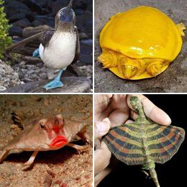 بالصور: تعرفوا إلى أغرب الحيوانات في العالم والتي تبدو من كوكب آخر