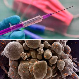 بعد ظهور طفرات جديدة من فيروس كورونا.. قلق بشأن فعالية اللقاحات!