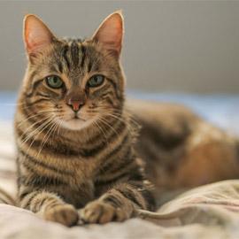 قوة سمعها أقوى من البشر بـ5 أضعاف.. إليكم معلومات شائقة عن القطط