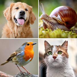 القطط تعرف لونين والحلزون لا يميز الأشكال! كيف ترى الحيوانات العالم؟