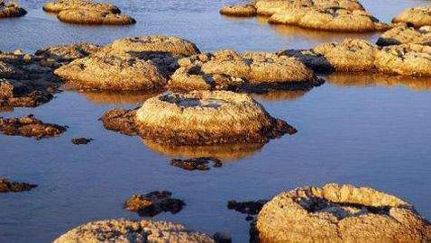ستروماتوليت.. كيف حوت أحافير صخرية أقدم أشكال الحياة على الأرض؟