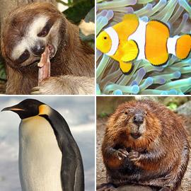 تعرفوا إلى 10 حقائق قمة في الغرابة من مملكة الحيوان