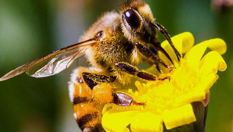حشرات لا يجب قتلها لهذا السبب!