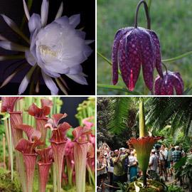 بالصور: تعرفوا إلى 4 من أغرب الزهور العجيبة في العالم
