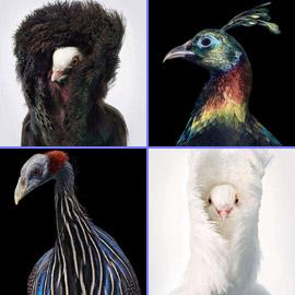صور مدهشة: إليكم أغرب الطيور في أروع جلسات التصوير