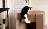 قفزات مدهشة لقطط مغامرة.....رائع