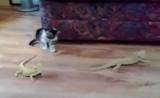 القطة المتوحشة