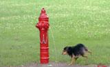 لا يفوتكم احلى اللحظات لردت فعل الكلاب بالماء
