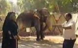 مقلب لا يفوتكم مع ابراهيم نصر والفيل