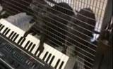 أغرب موهبة جدا رائعة كلاب البحر تعزف على الاورغ